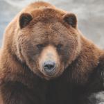 bear What Kind of Sleep Animal are You?